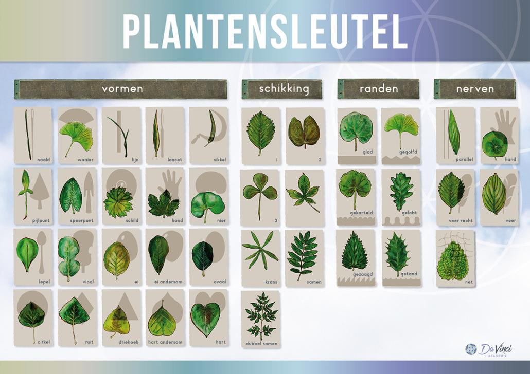 2018-05-07 DV10.0 - Plantensleutel
